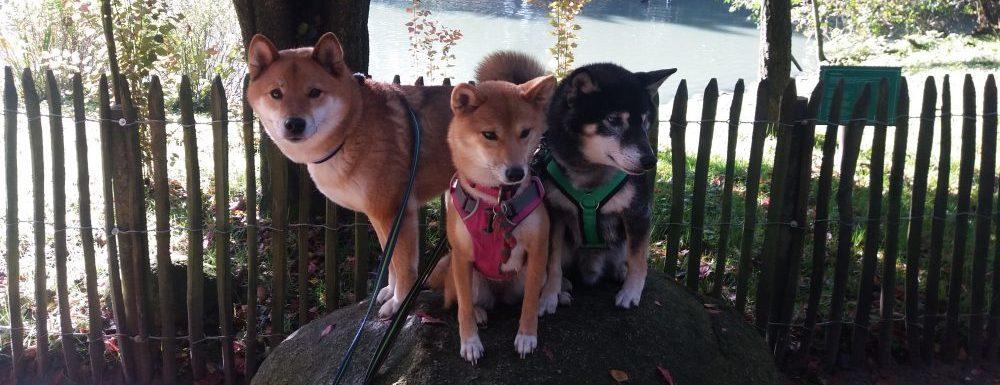 Mobile Hundeschule Buxtehude
